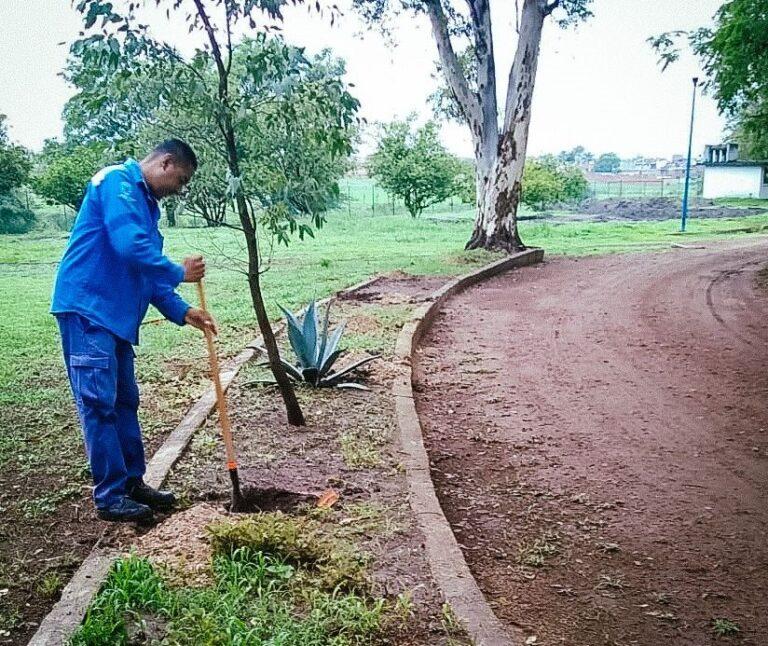 Delegación de Santa Ana Pacueco, planta 300 árboles en inmediaciones de la Unidad Deportiva.
