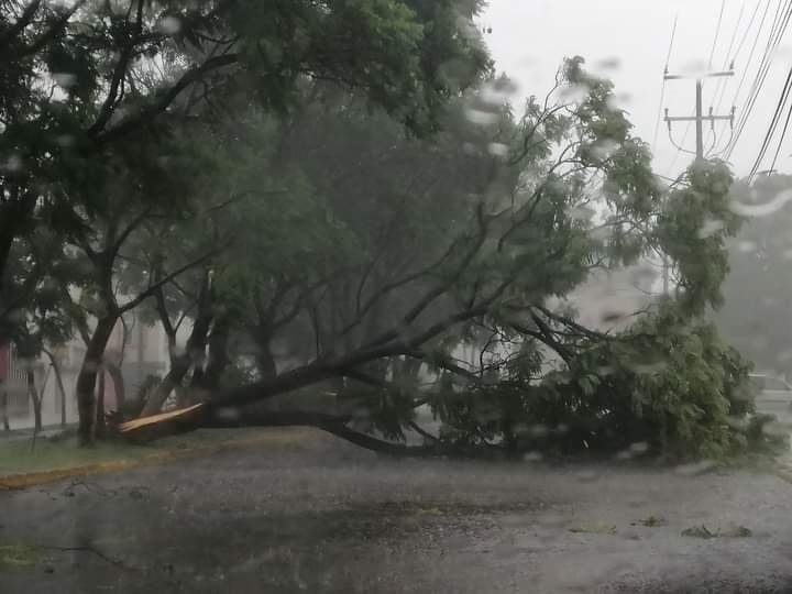 Fuerte lluvia causa daños, derriba arboles y Provoca Encharcamientos.