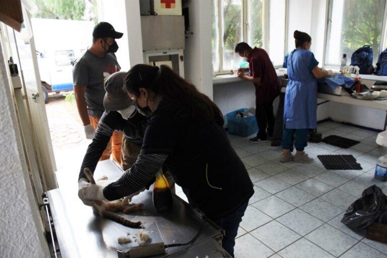 Esterilizan a 35 mascotas en Centro Antirrábico
