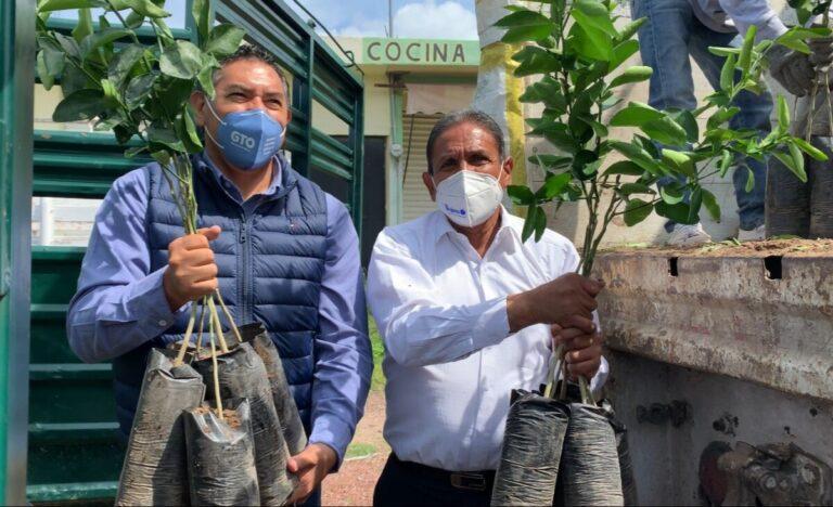 16 mil plantas de Limón Persa para Pénjamo.